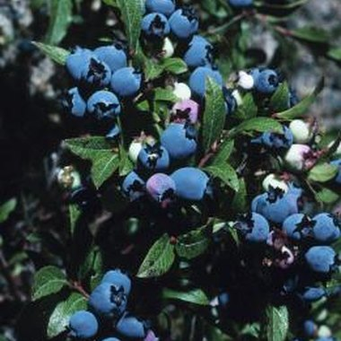 Blueberries will retain their nutrient value once frozen.