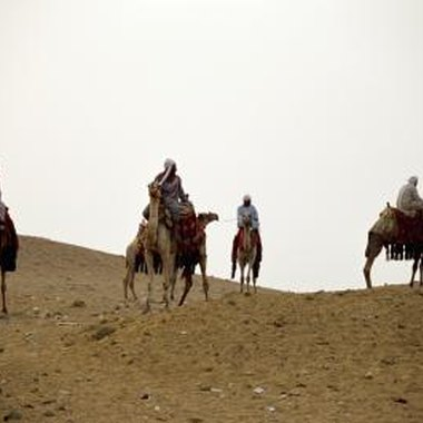 Camel tours are available for a Western Desert adventure.