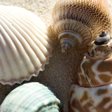 Use sea shells for decorating household objects.