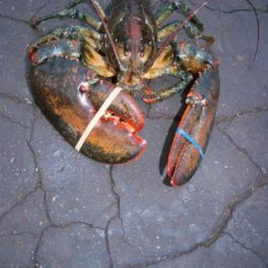 Lobsters are not superficially appealing, but their meat is very popular.