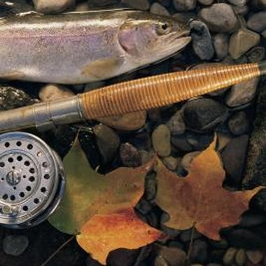 Learn how to fish at night to pull in good-sized rainbow trout.