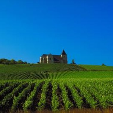 Champagne-Ardenne is famous for its miles of vineyards and its champagnes.