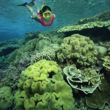 Cebu's large coral reefs attract many snorkelers.
