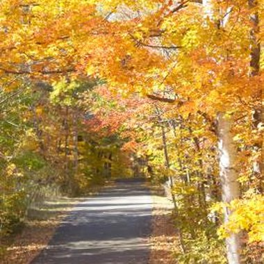 Enjoy the fall colors at one of Pennsylvania's fall festivals.