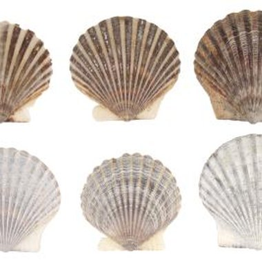 Seashells that are approximately the same height create less of a bumpy surface.