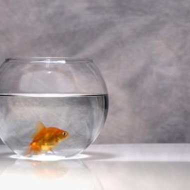 Let your pet fish help decorate your party room.