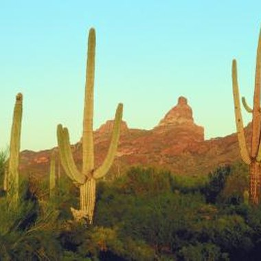 The Arizona outback offers hikers and hunters a wealth of opportunities.