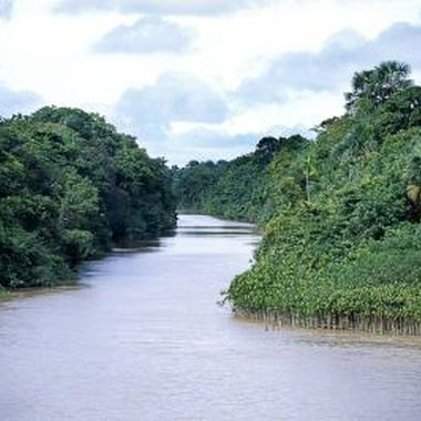 The Amazon in Guyana is home to thousands of exotic species.