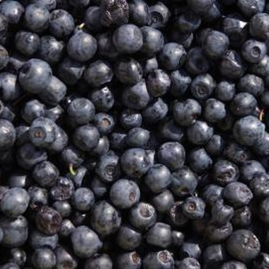 Kentucky's counties have a bounty of pick-your-own blueberry farms.