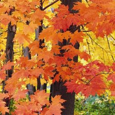 Ohio has dozens of fall festivals, celebrating the season, harvest and heritage.