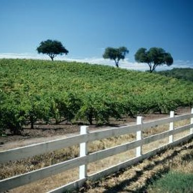 Vineyard and wine-tasting tours continue throughout fall in Napa Valley.