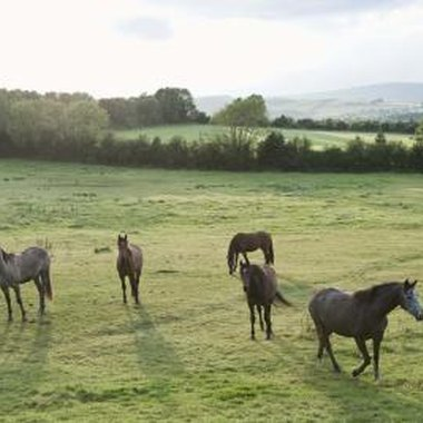 Ireland's Curragh is the heart of Kildare horse country.