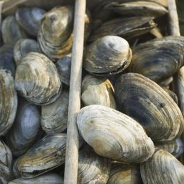 Head to New England during the summer for a day of clam digging.
