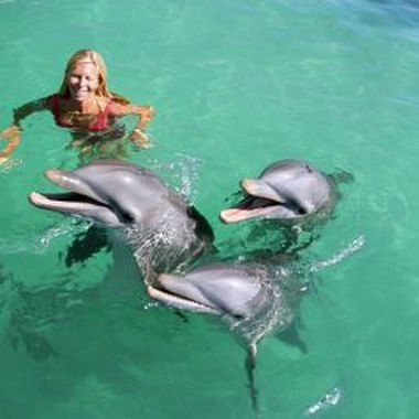 Create a photo album of dolphin swimming pictures.