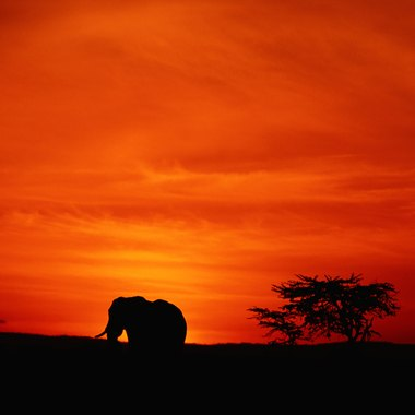 An African sunset makes a dramatic subject for a painting.
