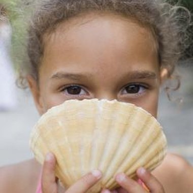 Pensacola's beaches are filled with collectable seashells.
