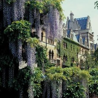 Wisteria plants add color and whimsy to dollhouse landscaping.