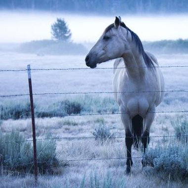 There are several overnight horse boarding facilities in New Mexico.