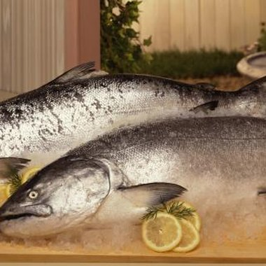 King and coho salmon are present in northern New York.