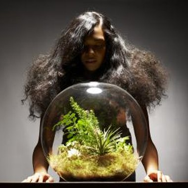 Terrariums have a history dating back to 1836.