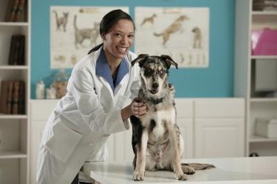 Make researching tuition costs for veterinary school a priority before applying.