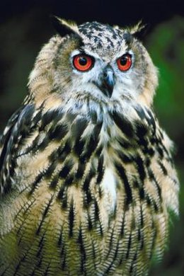 "In Richard Wilbur's poem, ""A Barred Owl,"" the tone shifts between stanzas."
