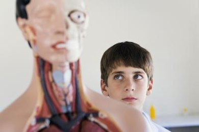 Viewing human models can make learning anatomy and physiology terms clearer.
