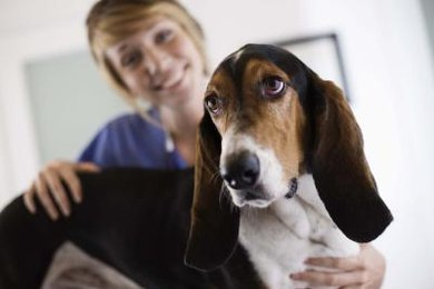 Vet techs are in high demand as of 2013 because of strong interest in animal health.