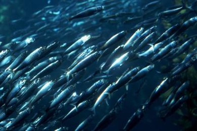 Marine biologists may use statistics to study fish populations.