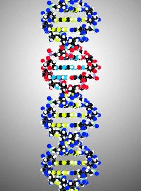 DNA is in the shape of a double helix, which looks like a twisted ladder.