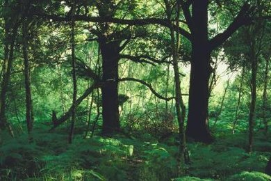 A forest ecosystem encompasses innumerable, inter-related components.