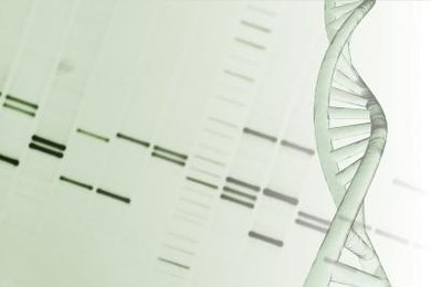 Genes are units of information encoded in DNA.