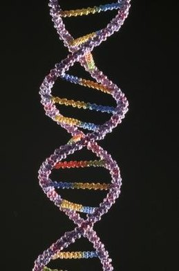 Human beings share 99 percent of the same DNA.