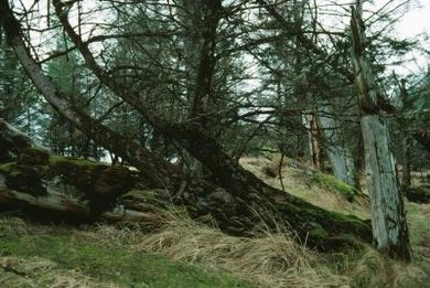 Comprehensive insurance may cover damage from a fallen tree.