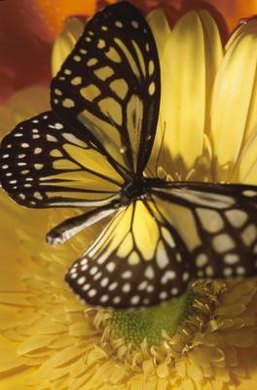 The butterfly in question rested on a yellow flower, unmoving.