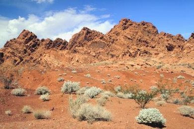 Temperate deserts commonly feature shrub vegetation.