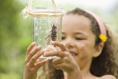 Kindergartners are captivated by the various lifestyles insects adopt.