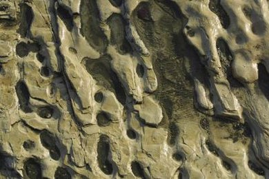 Sedimentary rocks are full of pores that can hold energy-rich oil and natural gas.