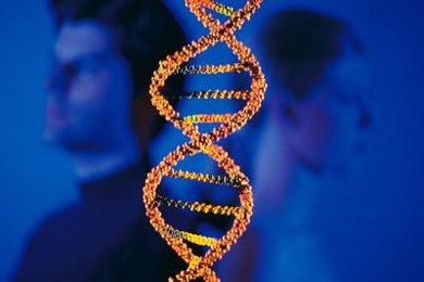 Every physical trait is determined by two alleles, which make up the genotype.