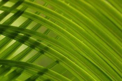 Kids often receive palm fronds to remember Palm Sunday.