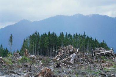 Deforestation can lead to impairments in the water cycle and greater air pollution.