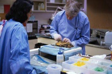 Forensic pathologists take college and medical school courses to become experts.