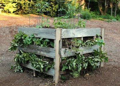 Now all that's left to do is watch your plants thrive in your homemade wood pallet garden.