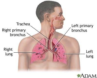 Normal Respiratory System