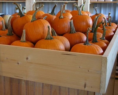 A cartful of pumpkins with their stems can be the start of a challenging game.