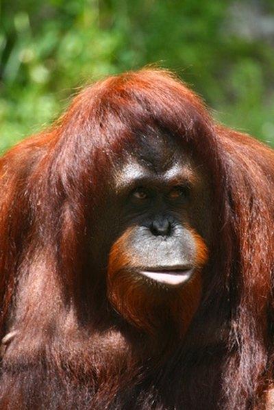 Asian Rainforest Facts 106