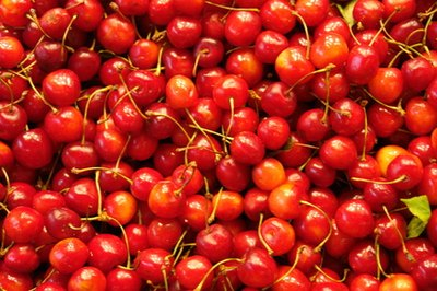 'Montmorency' is the most commonly grown sour cherry variety.