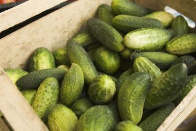 A crate of fresh-picked cucumbers.