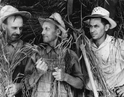 Three California Farmers, 1935