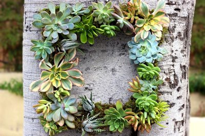 Succulents are easier to keep alive than many plants and look stunning in a wreath.